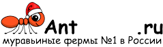 Муравьиные фермы AntFarms.ru - Ростов-на-Дону